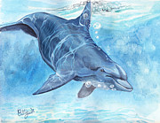 Bottle-nosed Dolphin Painting Posters - Going deep Poster by Callie Smith