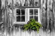 Rustic Art Prints - Going Green Print by Greg Fortier