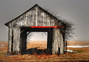 Rural Indiana Prints - Going Grey Print by Mark Orr