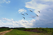 Country Scenes Metal Prints - Going To Roost Metal Print by Jan Amiss Photography