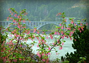 Landscape. Mountain Trees Water Bush Art - Gold Beach Bridge by Cindy Wright