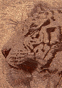 Digital Pyrography Posters - Gold Bengal Poster by Mayhem Mediums