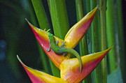 Lightscapes Prints - Gold Dust Day Gecko Print by Sean Griffin
