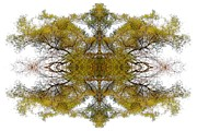 Kaleidoscope Art - Gold Dust by Debra and Dave Vanderlaan
