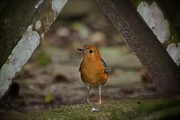 Birds Photos - Gold  by Gary Bridger