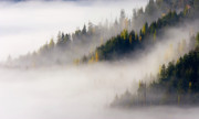 Mist Photos - Gold in them Hills by Mike  Dawson