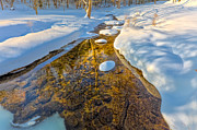 Winter Landscape Prints - Gold Stream Print by Bill  Wakeley