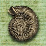 Half Shell Prints - Golden Ammonite Print by Ramneek Narang