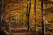 Forest Floor Prints - Golden Autumn Print by Andreas Levi