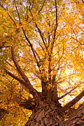 Autumn Decorations Posters - Golden Autumn View Poster by James Bo Insogna