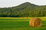 Douglas Barnett - Golden Bales of Hay ...