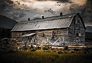 Old Barns Prints - Golden Barn  Print by Wayne Sherriff