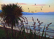 Golden Bay Dusk Print by Karen Lewis