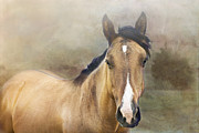Quarterhorses Posters - Golden Poster by Betty LaRue