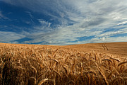 Wheatfields Photo Prints - Golden Blessings Print by Reflective Moments  Photography and Digital Art Images