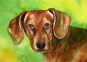 Watercolor Print Framed Prints - Golden Brown Dachshund Framed Print by Cherilynn Wood