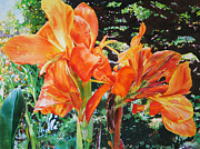 Cannas Framed Prints - Golden Cannas Framed Print by Kathleen Ballard