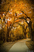 Autumn Scenes Prints - Golden Canopy Print by Lena Sandoval-Stockley