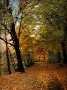 Autumn Foliage Photos - Golden Carpet by Jessica Jenney