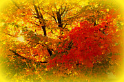 Red Leaf Posters - Golden Colors of Fall Poster by Susanne Van Hulst