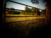 Rural Landscapes Photos - Golden Country Fence by Joyce L Kimble