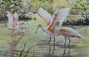 Spoonbill Paintings - Golden Day by Tom  Bond