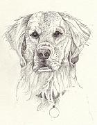 Best Friend Drawings - Golden by Deborah Wetschensky