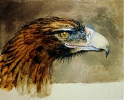 Eagle Painting Framed Prints - Golden Eagle Head Framed Print by Pg Reproductions
