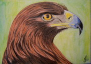 Eagle Drawing Drawings Originals - Golden Eagle by Marita Lipke