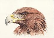 Eagle Painting Framed Prints - Golden Eagle Framed Print by Morgan Fitzsimons