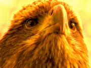 Jan Bonner - Golden Eagle Portrai...