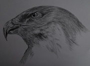Mono Drawings Prints - Golden Eagle Sketch Print by Cynthia Adams