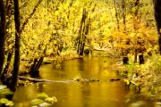Hillsboro Prints - Golden Fall  Print by Greg Fortier