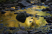 West Fork River Photos - Golden Fall Reflection by Heather Kirk