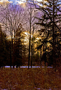 Rural Snow Scenes Prints - Golden fields and Violet Sky Print by LeeAnn McLaneGoetz McLaneGoetzStudioLLCcom