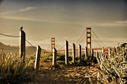 Sun Rise Prints - Golden Gate Bridge - 3 Print by Mark Madere