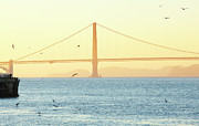 Flock Of Bird Art - Golden Gate Bridge At Dusk by Allan Baxter