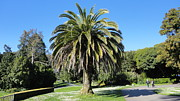 Conservatory Of Flowers Photos - Golden Gate Park  by Eliot Jenkins