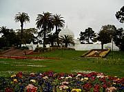 Conservatory Of Flowers Photos - Golden Gate Park Foggy Day by Sharon Donahue