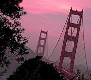 Golden Gate Framed Prints - Golden Gate Pink Moment Framed Print by Elizabeth Hoskinson