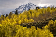 Golden Grand Teton Print by Johanne Peale