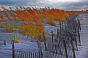 Orange Digital Art Originals - Golden Grasses and the Beach by Michael Thomas