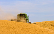 Combine Photos - Golden Harvest by Mike  Dawson