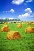 Field. Cloud Posters - Golden hay bales in green field Poster by Elena Elisseeva