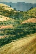 California Hills Posters - Golden Hills Poster by Donald Maier