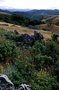 Landscape Framed Prints Metal Prints - Golden Hills of Summer Metal Print by Kathy Yates
