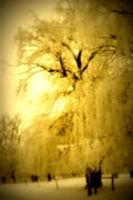 Weeping Willow Photos - Golden by Julie Lueders