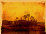 Abstract Palm Trees Photos - Golden Land by Susanne Van Hulst
