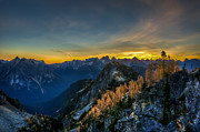 North Cascades Posters - Golden Larch Poster by Ian Stotesbury