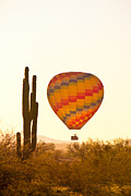 Colorful Photos Posters - Golden Light Hot Air Balloon And Saguaro Cactus Poster by James Bo Insogna